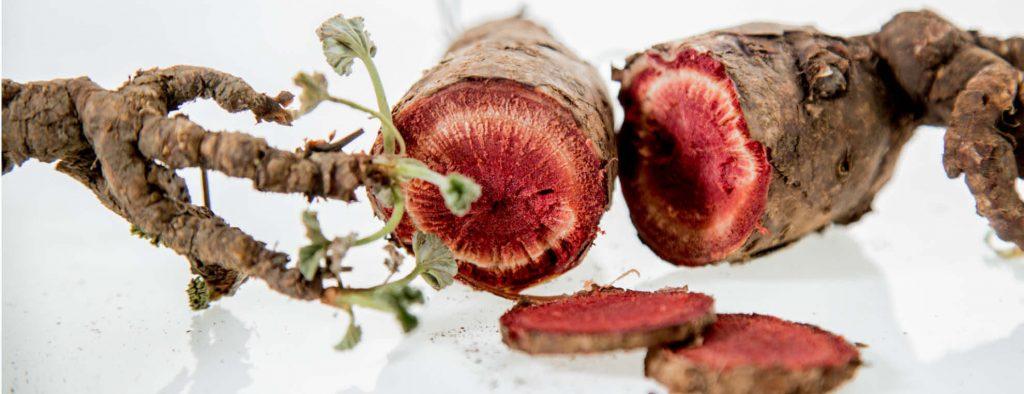 afrigetics-botanicals-pelargonium-sidoides-pela-power-extract