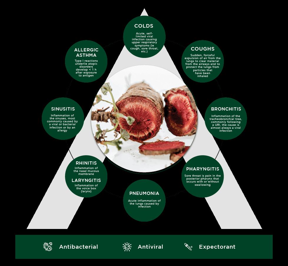 afrigetics-botanicals-pelargonium-sidoides-treatable-conditions