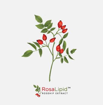 afrigetics-botanicals-products-rosa-canina-rosehip
