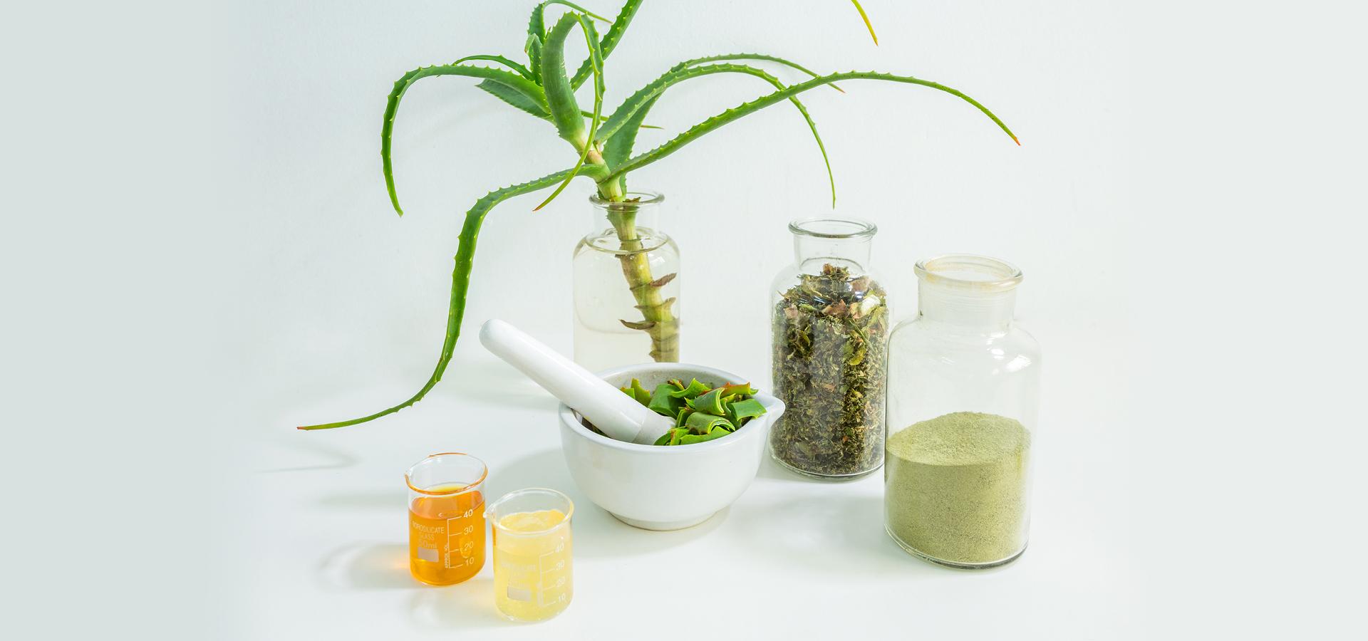 afrigetics-botanicals-aloe-arborescens