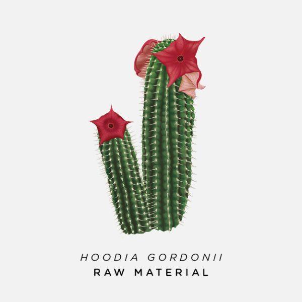 Hoodia Gordonii Powder Bushman S Hat 1kg Afrigetics Botanicals